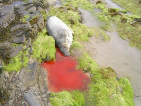 Photo Orkney Seal Rescue