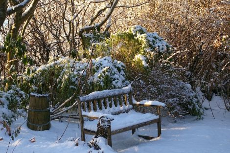 Longing for some snow to turn the the garden into a white fairytale - Photo: Rosa Steppanova/Lea Gardens