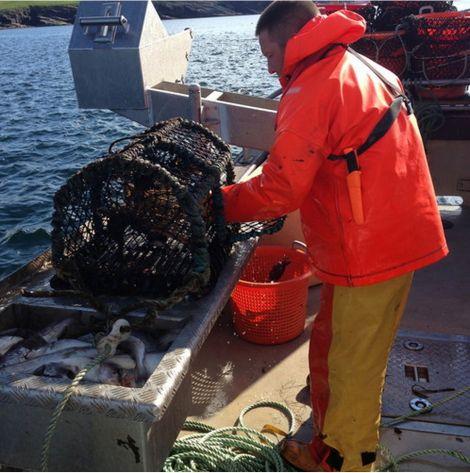 Creel fisherman Alan Pottinger hard at work. Photo: Jane Moncrieff