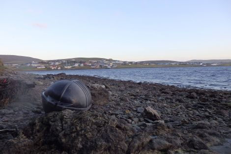 A mussel float lying on the coast at Brae. Photo Wills Sandilands