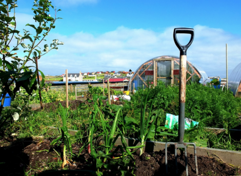 The new group envisages creating allotments in Lerwick similar to a scheme already up and running in Sandwick. Photo: Steven Christie
