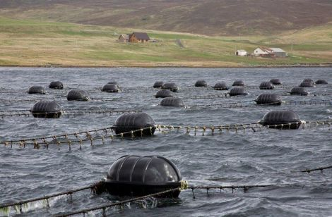 A typical Blueshell mussel farming site.