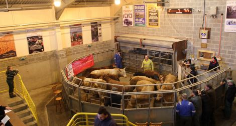 Thursday's meeting will be held at the marts at Staneyhill. Photo: Shetland News