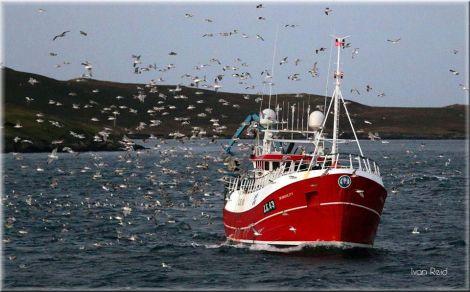 Local whitefish boat Tranquility fishing off Shetland. Photo: Ivan Reid