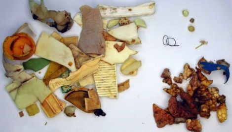 Plastic found in the stomach of a fulmar. Photo courtesy of KIMO.