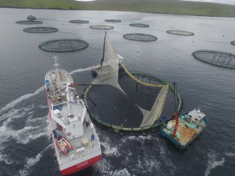 The flexi panel size-grading fish in a Shetland salmon cage. Photo: Grading Systems (UK)