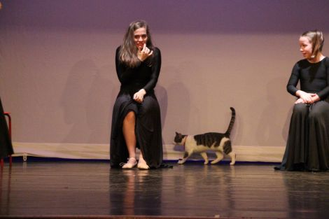 Tommy the cat sauntering on stage at the Garrison Theatre during a Shetland Community School of Ballet rehearsal. Photo: Susan Msalila